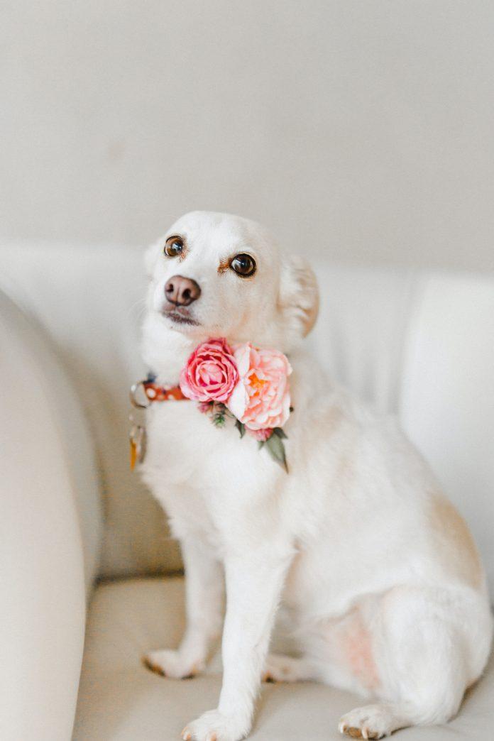 5 Best Dog Grooming in London