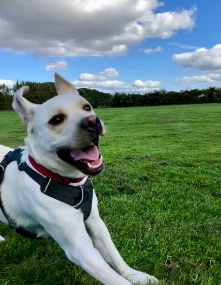 5 Best Dog Walkers in Manchester