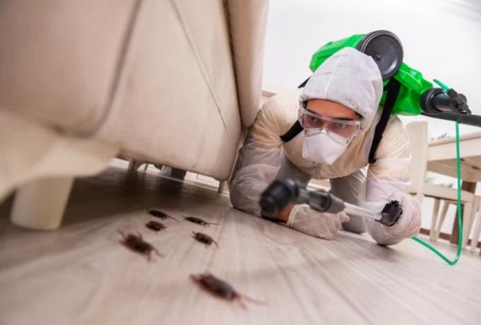 5 Best Exterminators in London