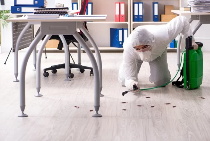 5 Best Pest Control Companies in Manchester