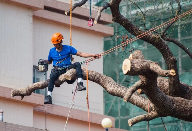5 Best Tree Services in London