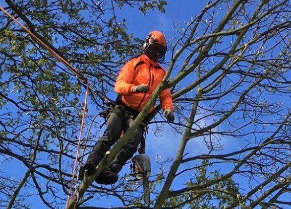 Darcy Tree Services