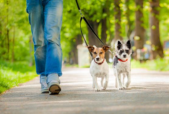 London Dog Walking