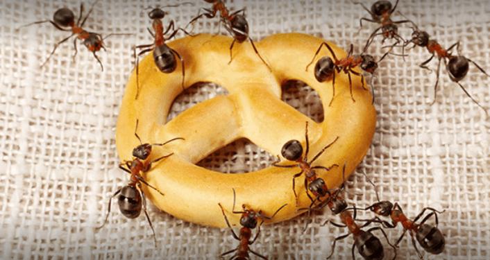 Pest Control 24 London Services