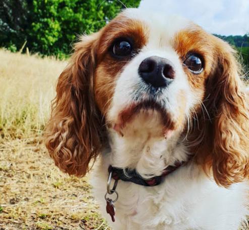 The London Dog Walking Company