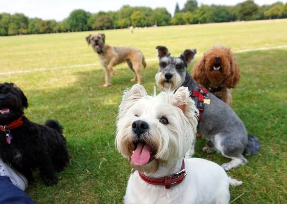 Dogbliss Dog Daycare & Dog Walking