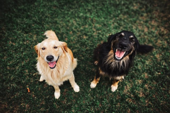 5 Best Doggy Day Care Centre in Manchester