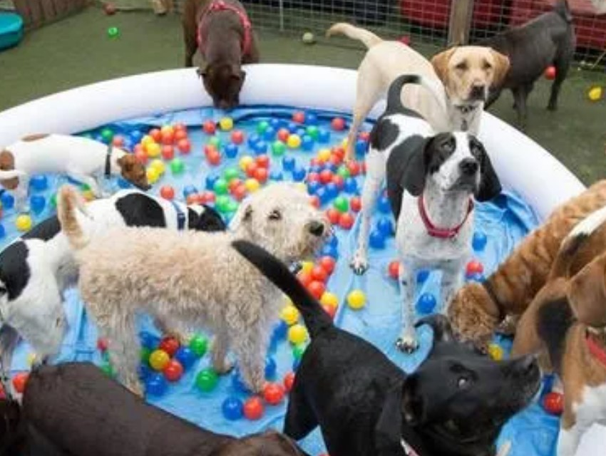 Dogs and Divas Dog Daycare Trafford Park