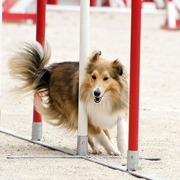 Precious Paws Doggy Day Care