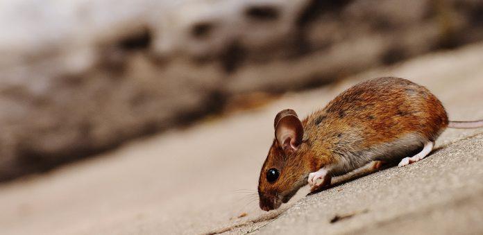 5 Best Exterminators in Sheffield