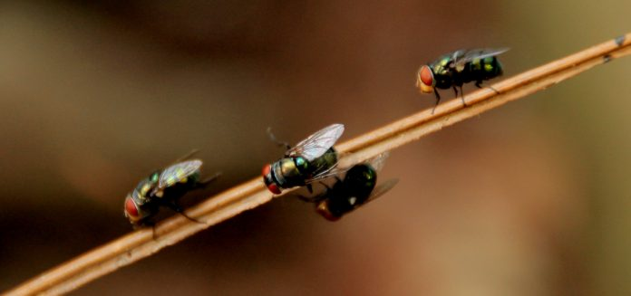 5 Best Pest Control Companies in London