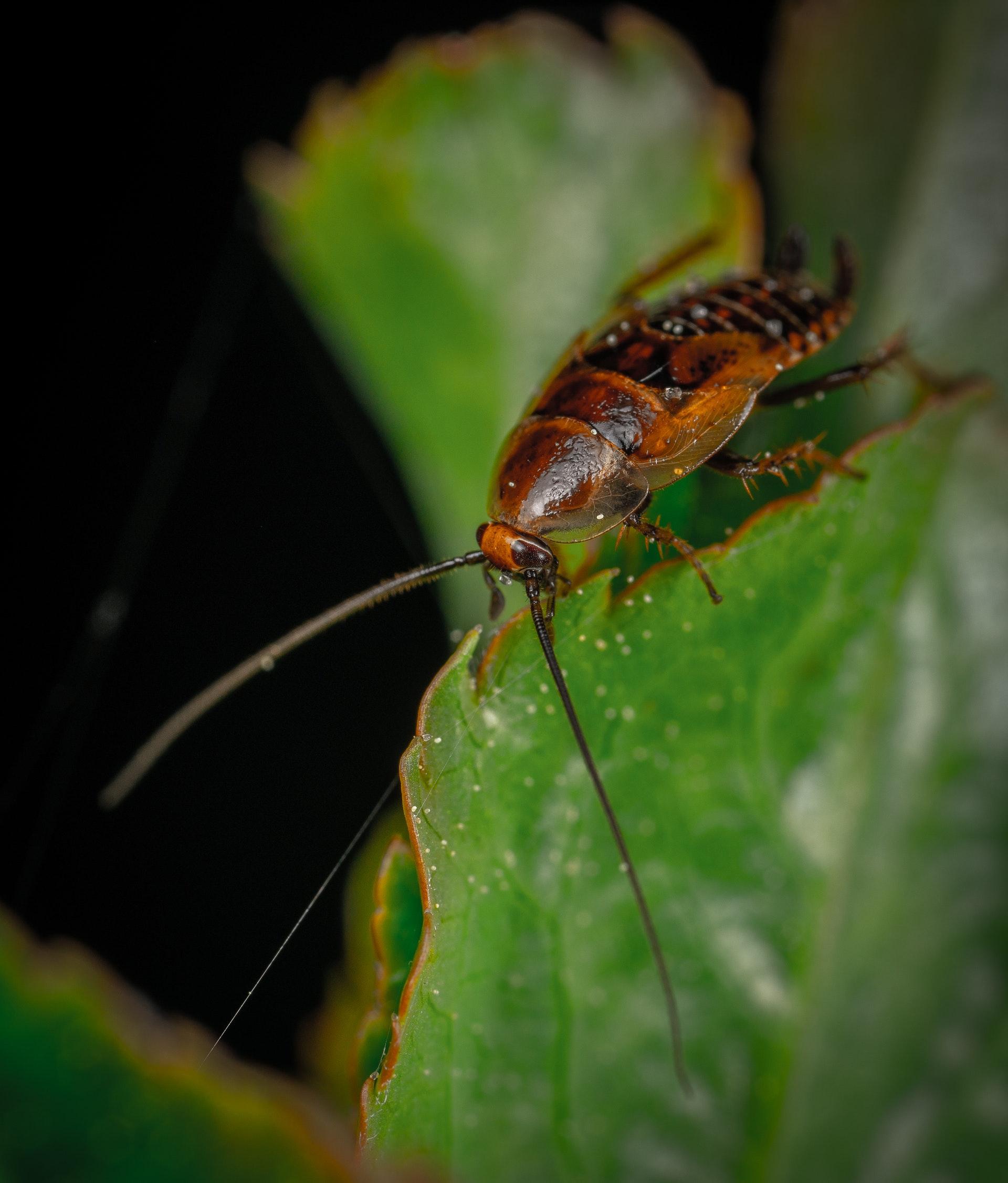 West Norwood Pest Control Services