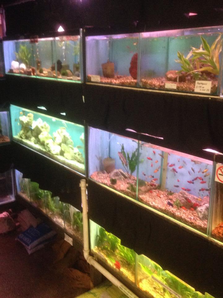Beacon Pet Aquarium