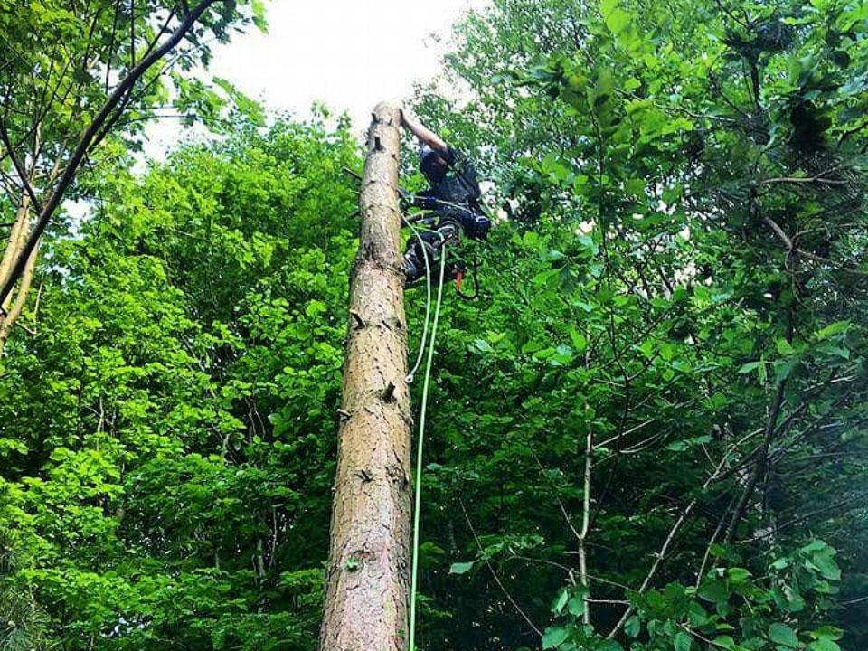 Bridgewater Tree Services