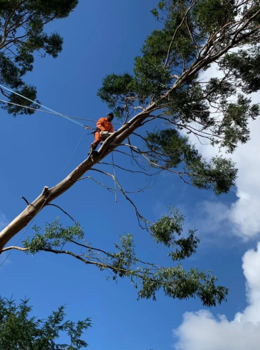 Enviro Tree Services