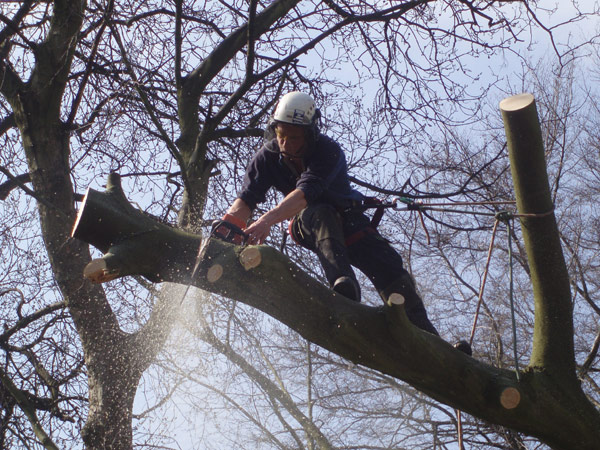 Liverpool Tree Care Services Ltd
