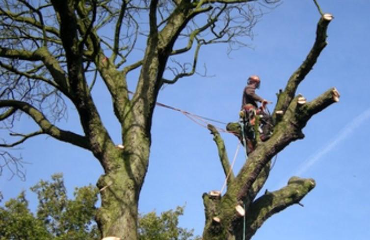 Manchester Tree Surgeon