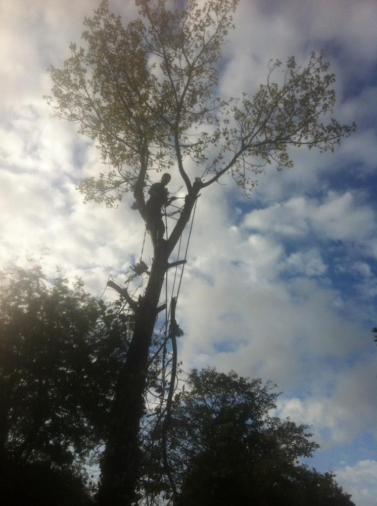 Rapid Tree Care Liverpool