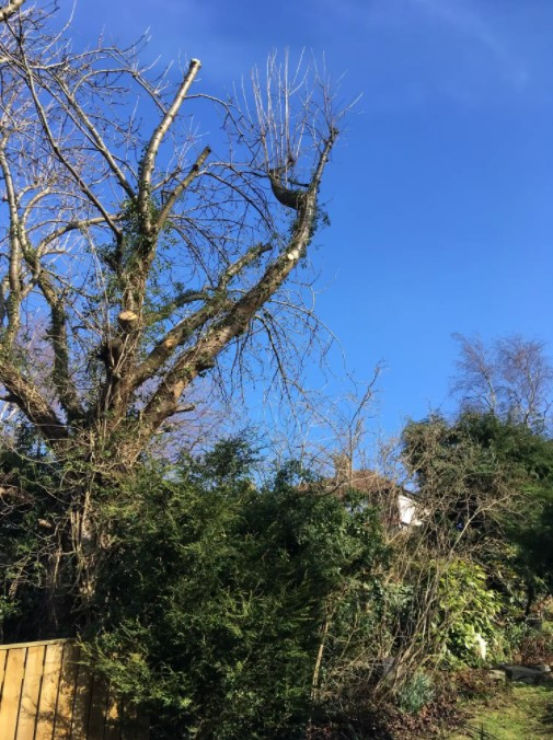 A Singleton and Son Tree Services