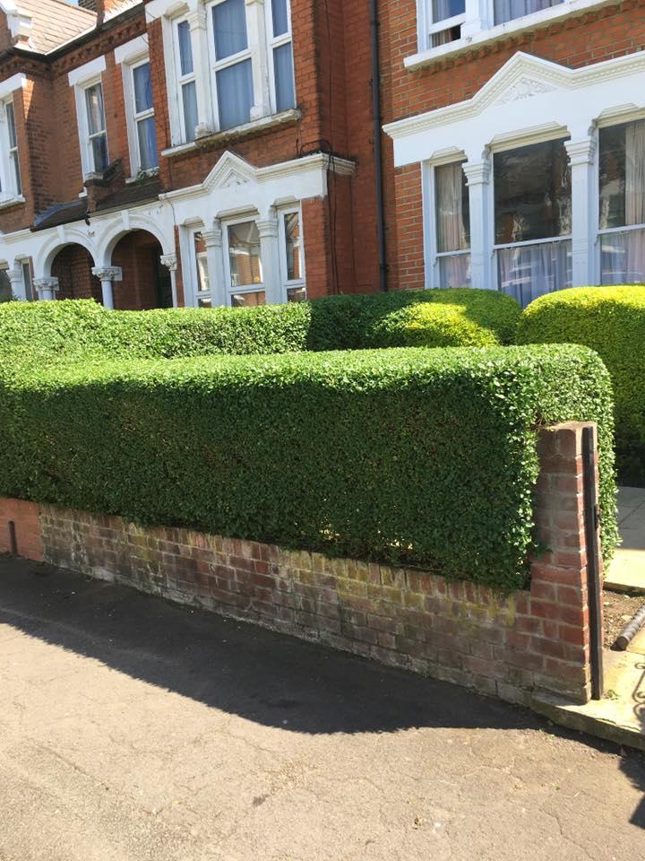 Green Garden Gardening Services Ltd