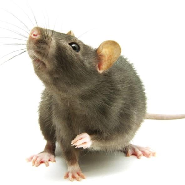 Independent Pest Control & Hygiene Services Ltd