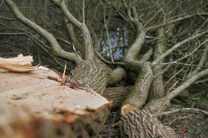 5 Best Arborists in Newcastle