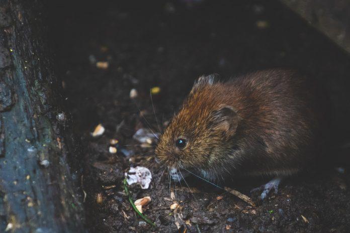 5 Best Exterminators in Leeds