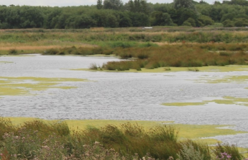 Lunt Meadows Nature Reserve