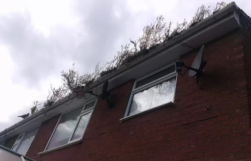 Star Gutter Cleaning & Repairs