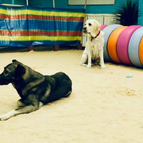 Nic's Stay and Play Doggy Daycare