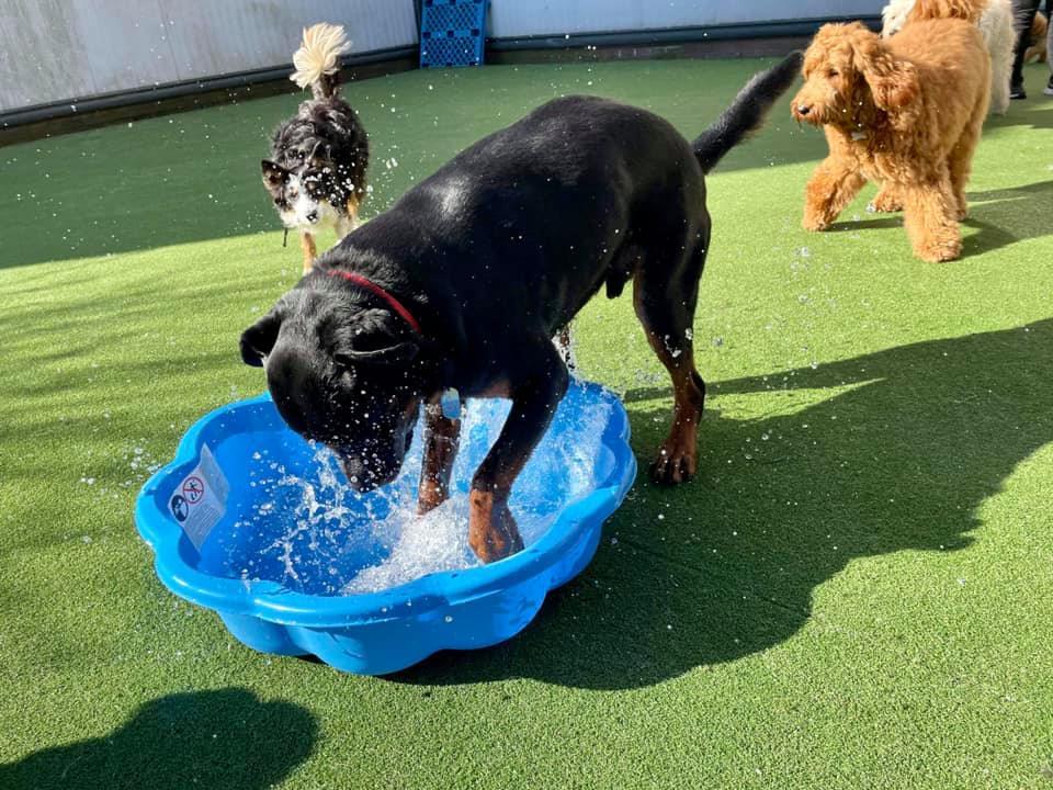 Pawtropolis Dog Day Care Ltd