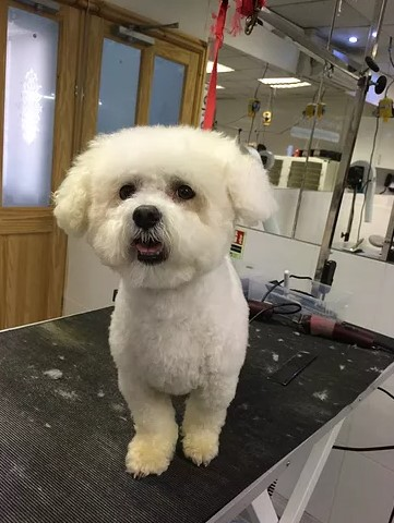 Home From Home Dog Groomers