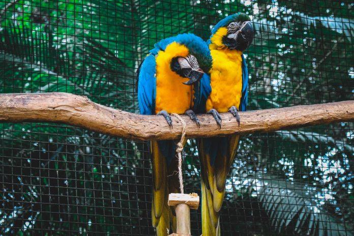 5 Best Aquariums/Zoos in London